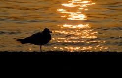 Silueta de la gaviota en la puesta del sol Imagenes de archivo