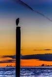 Silueta de la gaviota que descansa sobre posts en la puesta del sol Foto de archivo libre de regalías
