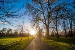 Silueta de la gente que camina hacia puesta del sol en un parque Imágenes de archivo libres de regalías