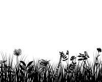 Silueta de la hierba Imagenes de archivo