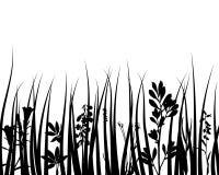 Silueta de la hierba Foto de archivo libre de regalías