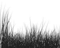 Silueta de la hierba Fotografía de archivo libre de regalías