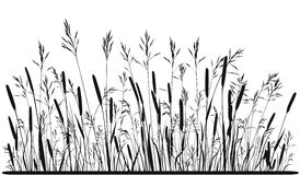 Silueta de la hierba de prado Imagen de archivo