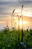 Silueta de la hierba en un campo Foto de archivo