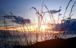 Silueta de la hierba o del prado Imagen de archivo libre de regalías