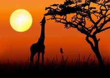 Silueta de la jirafa en puesta del sol stock de ilustración