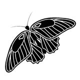 Silueta de la mariposa Foto de archivo libre de regalías