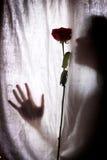 Silueta de la mujer y de la rosa del rojo Imagenes de archivo