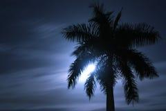 Silueta de la palma Imagenes de archivo