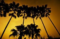 Silueta de la palma Foto de archivo