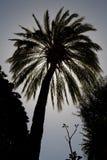Silueta de la palma Fotografía de archivo libre de regalías