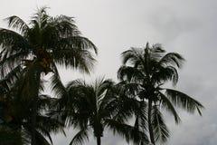 Silueta de la palmera Imagen de archivo libre de regalías