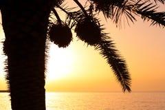 Silueta de la palmera Imagenes de archivo