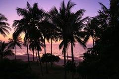 Silueta de la palmera Fotografía de archivo libre de regalías