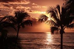 Silueta de la palmera contra el cielo amarillo de la puesta del sol - Hawaii Fotos de archivo libres de regalías