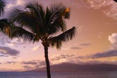Silueta de la palmera contra el cielo azul y amarillo de la puesta del sol - Hawaii Imagenes de archivo