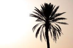 Silueta de la palmera en la puesta del sol Fotos de archivo