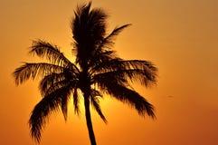 Silueta de la palmera en la puesta del sol Foto de archivo libre de regalías