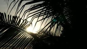 Silueta de la palmera en tiempo de mañana para el uhd 25fps del fondo o de la textura 4k metrajes