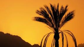 Silueta de la palmera tropical en la puesta del sol en la cámara lenta almacen de metraje de vídeo
