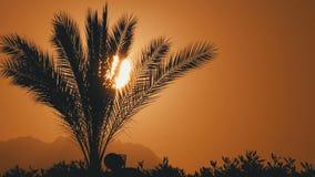 Silueta de la palmera tropical en la puesta del sol metrajes