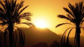 Silueta de la palmera tropical en la puesta del sol almacen de metraje de vídeo