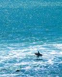 Silueta de la persona que practica surf Imágenes de archivo libres de regalías