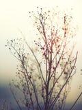 Silueta de la planta del invierno Foto de archivo libre de regalías