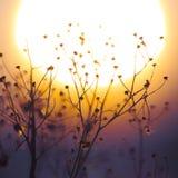 Silueta de la planta del invierno en la puesta del sol Imágenes de archivo libres de regalías