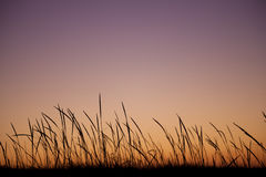 Silueta de la planta en el amanecer/la puesta del sol imágenes de archivo libres de regalías