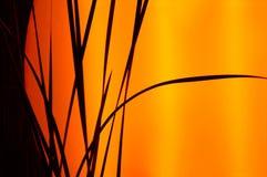 Silueta de la puesta del sol Imagen de archivo