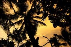 Silueta de la puesta del sol de las palmas foto de archivo libre de regalías