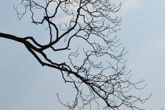 Silueta de la rama de árbol contra el cielo azul foto de archivo libre de regalías