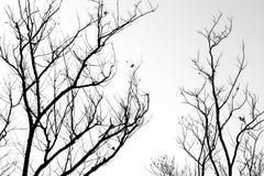 Silueta de la rama de árbol Foto de archivo libre de regalías