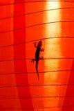 Silueta de la salamandra foto de archivo