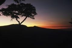 Silueta de la salida del sol de Serengeti Imagen de archivo