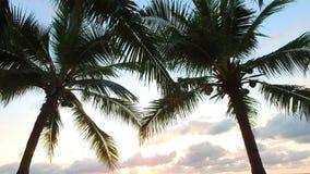 Silueta de la toma panorámica de una rama de la palma almacen de metraje de vídeo