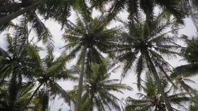 Silueta de las altas palmas de coco en el fondo del cielo de la tarde, tierra-ángulo tirado almacen de video