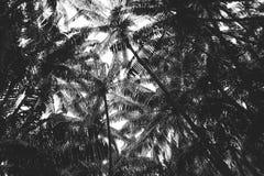 Silueta de las hojas del plam foto de archivo libre de regalías