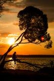 Silueta de las mujeres jovenes que se sientan en el árbol en la puesta del sol foto de archivo