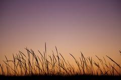 Silueta de las plantas en la puesta del sol imagen de archivo