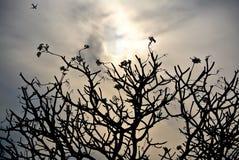 Silueta de las ramas de árbol y del vuelo del aeroplano en el cielo fotos de archivo libres de regalías