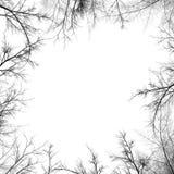 Silueta de las ramificaciones de árbol Fotos de archivo libres de regalías