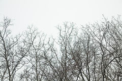 Silueta de las tapas del árbol en fila imágenes de archivo libres de regalías