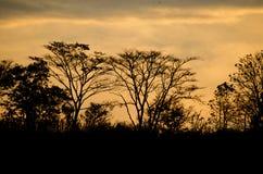 Silueta de los árboles Imagenes de archivo