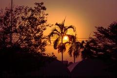 Silueta de los árboles de coco y de otros árboles con salida del sol en el fondo en la mañana Fotografía de archivo
