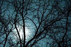 Silueta de los árboles de la noche Fotos de archivo libres de regalías