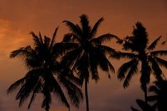 Silueta de los árboles del plam Foto de archivo
