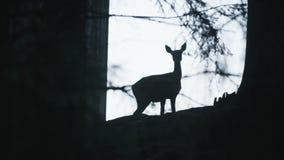 Silueta de los ciervos de huevas almacen de metraje de vídeo