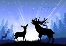 Silueta de los ciervos y del canguro que se colocan en la época de la mañana Foto de archivo